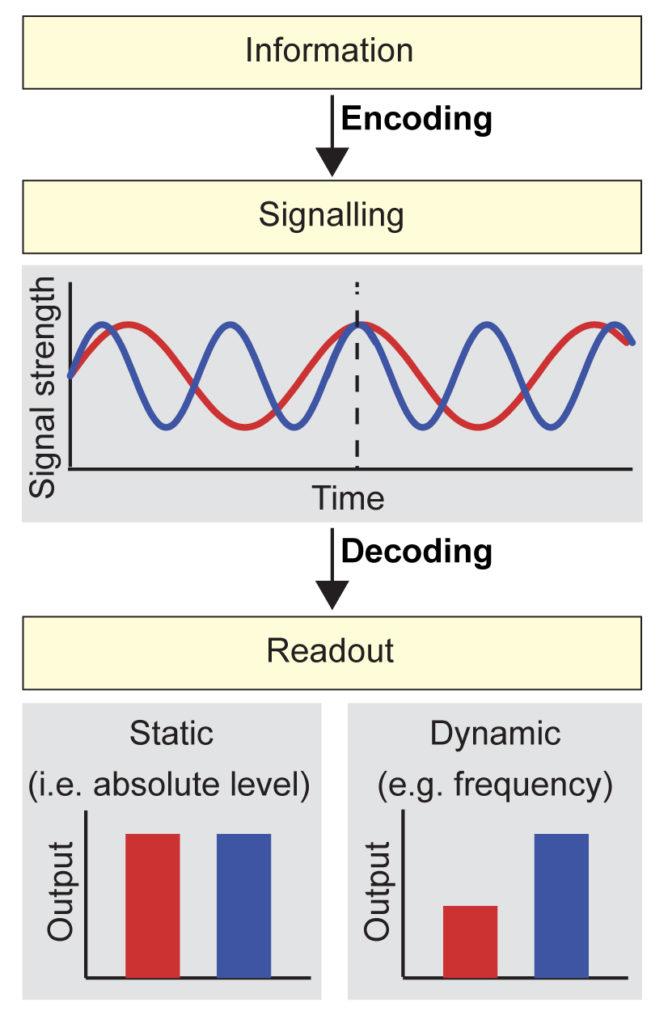 Signaling dynamics